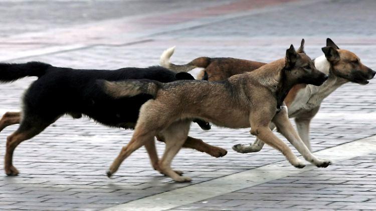streunende hunde_Moskau.jpg