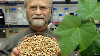 Prof. Klaus Becker mit einer Schale Jatropha-Nüssen