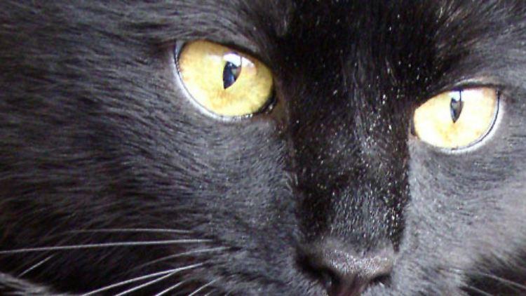 Schwarzes Katzen-Sex-Spiel