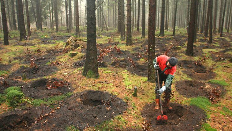 Waldaufforstung.jpg
