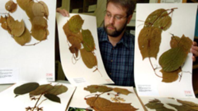 Die Digitalisierung der getrockneten Pflanzen soll bis 2012 abgeschlossen sein.