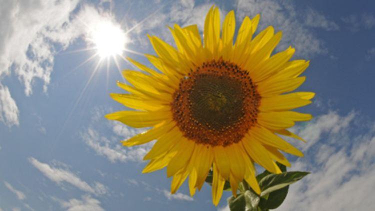 Solar ist nicht gleich Solar - das ist für interessierte Anleger die wohl wichtigste erste Erkenntnis. Wer in die Sonnentechnologie investieren möchte, sollte die großen Produktionsschritte auf dem Weg zum fertigen Solarmodul kennen, denn zahlreiche Anbieter haben sich auf einzelne Zwischenprodukte spezialisiert.