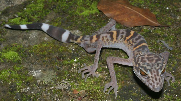 gecko2.jpg