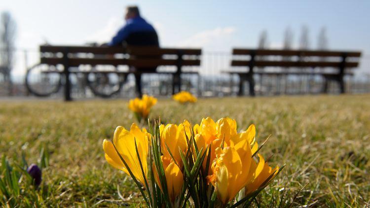 Berühmt Die Farben des Frühlings: Mit allen Sinnen genießen - n-tv.de @IH_59