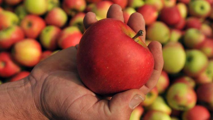 Keine Legende: Vitaminreiche Früchte machen Jugendliche fit für den Alltag. Neben Vitamin A, C und D ist aber auch der Nährstoff Eisen wichtig. Foto: Patrick Seeger