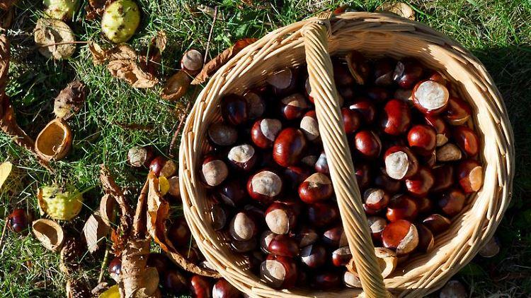 Kastanien sammeln oder das bunte Herbstlaub im Wald bewundern: Solche Dinge können glücklich machen - nicht nur am «Tag der einfachen Freuden». Foto: Patrick Pleul