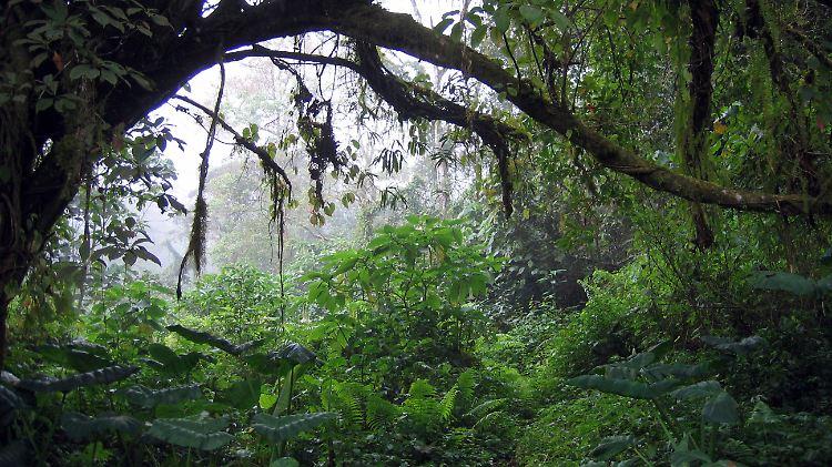 regenwald.jpg