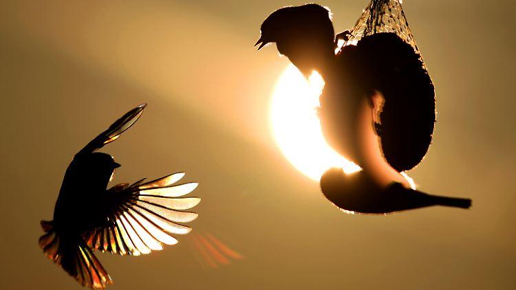Frage Antwort Nr 252 Verstehen Vogel Was Andere Zwitschern