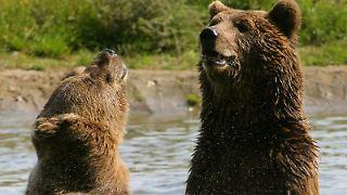 Viel Spaß beim Baden: Ben und Felix gehören zu den zehn Braunbären, die im Bärenwald Müritz ein neues Zuhause erhalten haben.jpg