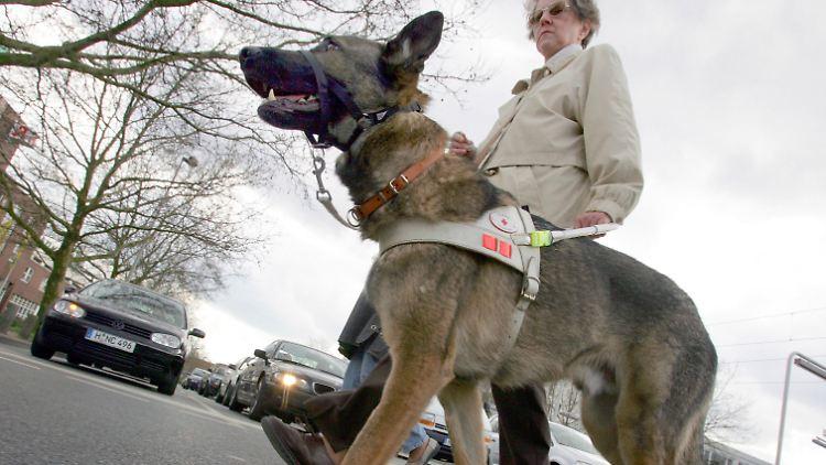 Blindenfuehrhund2.jpg
